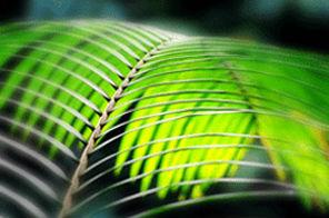 tropsko razvajanje